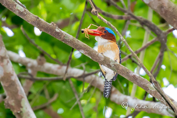 birds of Khao Yai-7284