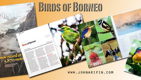 Asian Geographic Magazine- Birds of Borneo