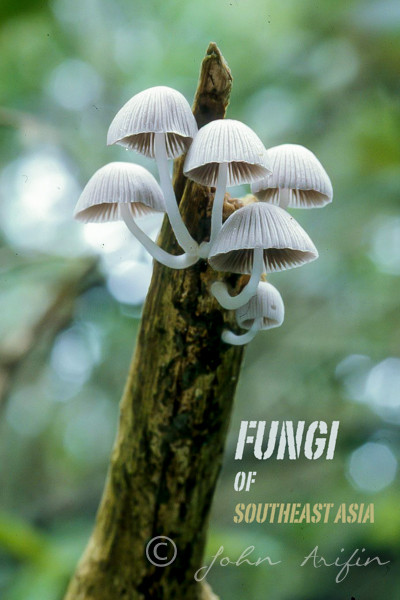 Photographing Fungi in Southeast Asia