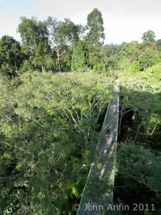 Treetop Walk at Rainforest Discovery Centre Sabah