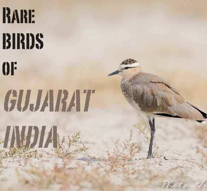 3rd Global Birdwatcher's Conference Kutch Gujarat India