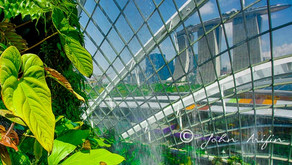 Plant and landscape photography at Singapore Gardens by the Bay