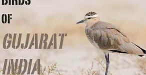 3rd Global Bird Watchers' Conference, Kutch, Gujarat. Bird watching India.