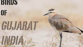 3rd Global Bird Watchers' Conference, Kutch, Gujarat. Bird watching India.