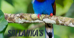 Bird Watching, bird Photography in Sri Lanka