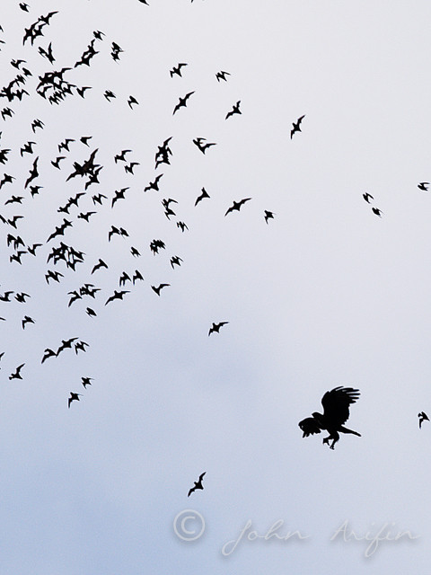 Bird watching in Sarawak Borneo