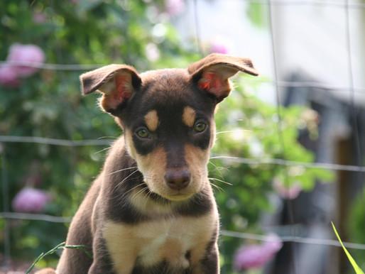 Hundebur - 5 vanlige feil og mulige løsninger