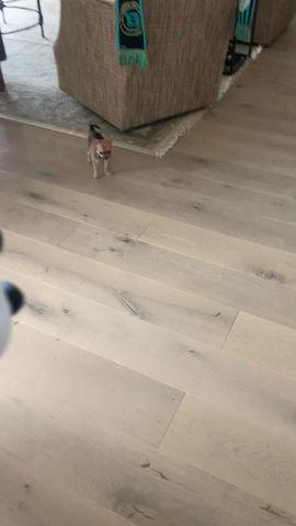 Happy Dog; Happy Home