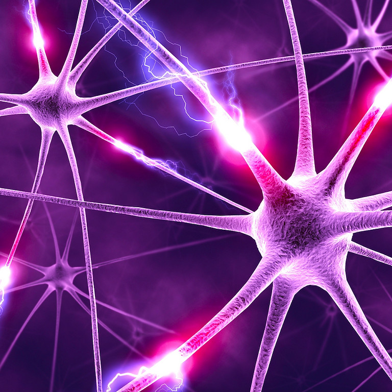 The Nervous System Healing