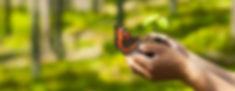 Papillon mains.jpg