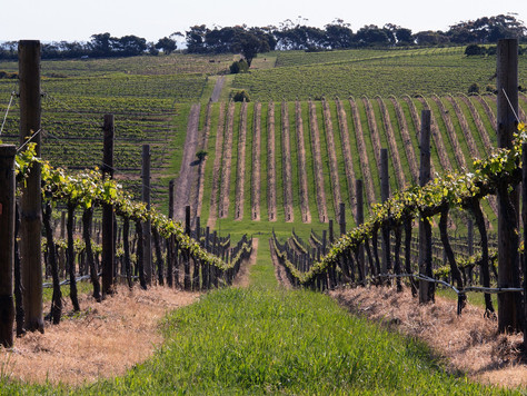 12 Australian Wine Regions You Should Visit