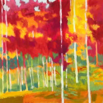 "Marshall Noice | Mountain Maples | Oil on Canvas | 48x48"" | 9,300."
