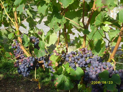 Wine St Emilion