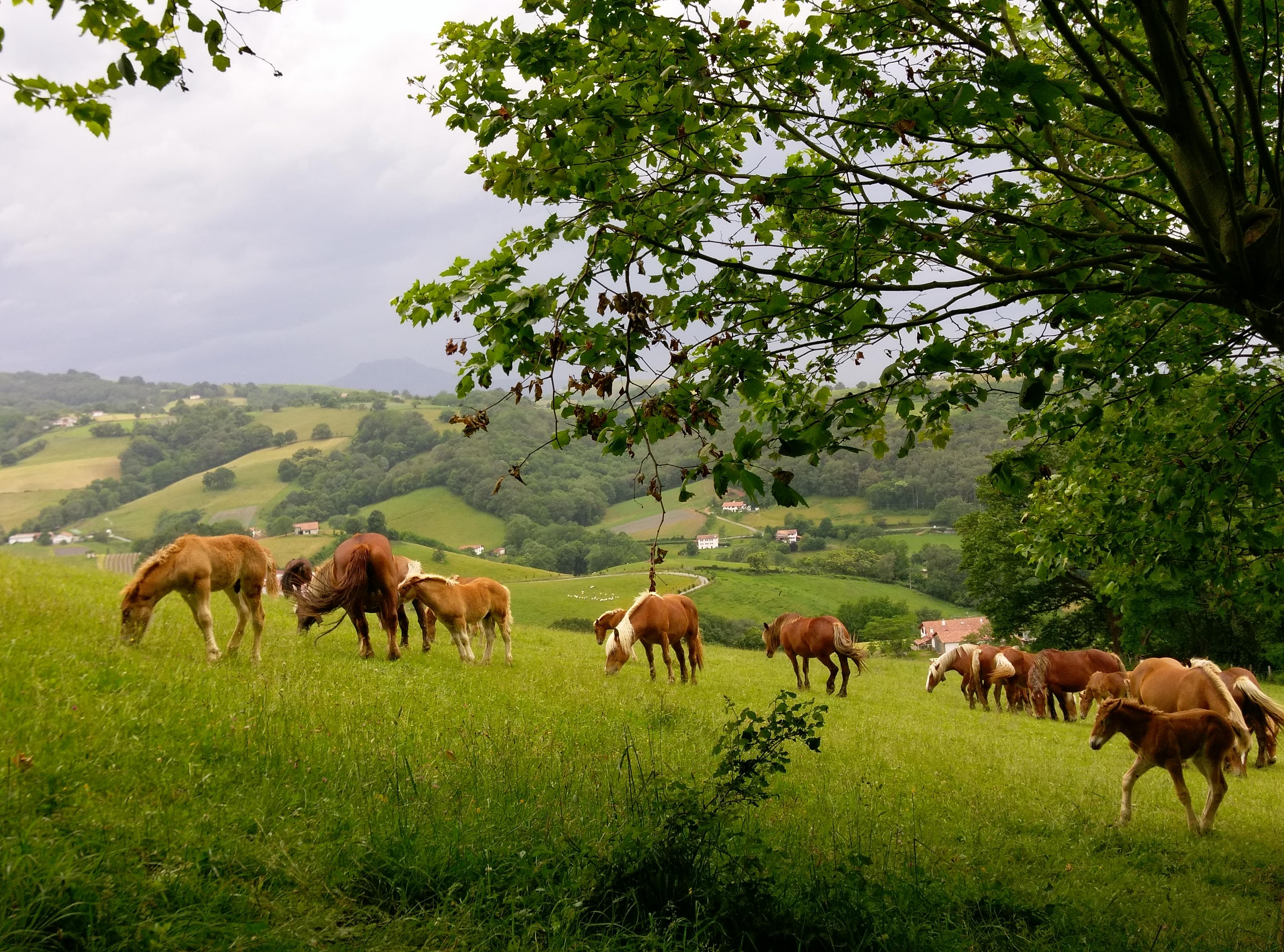 Basque Land