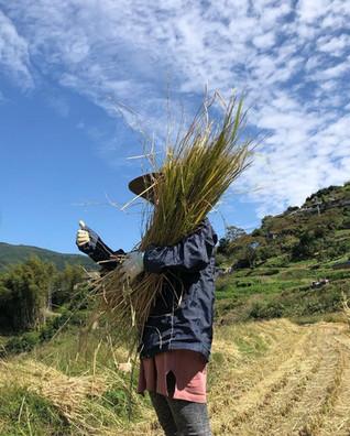 収穫の様子01