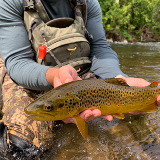 Late Summer 2019 - Trout Fishing is Back ON!