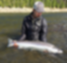 Drift Outfitters, atlantic salmon, Loop Tackle Desgn, Rio Prducts, fly fishing