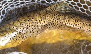Trout Opener Gear Check-Up.  Don't get caught with your waders down!