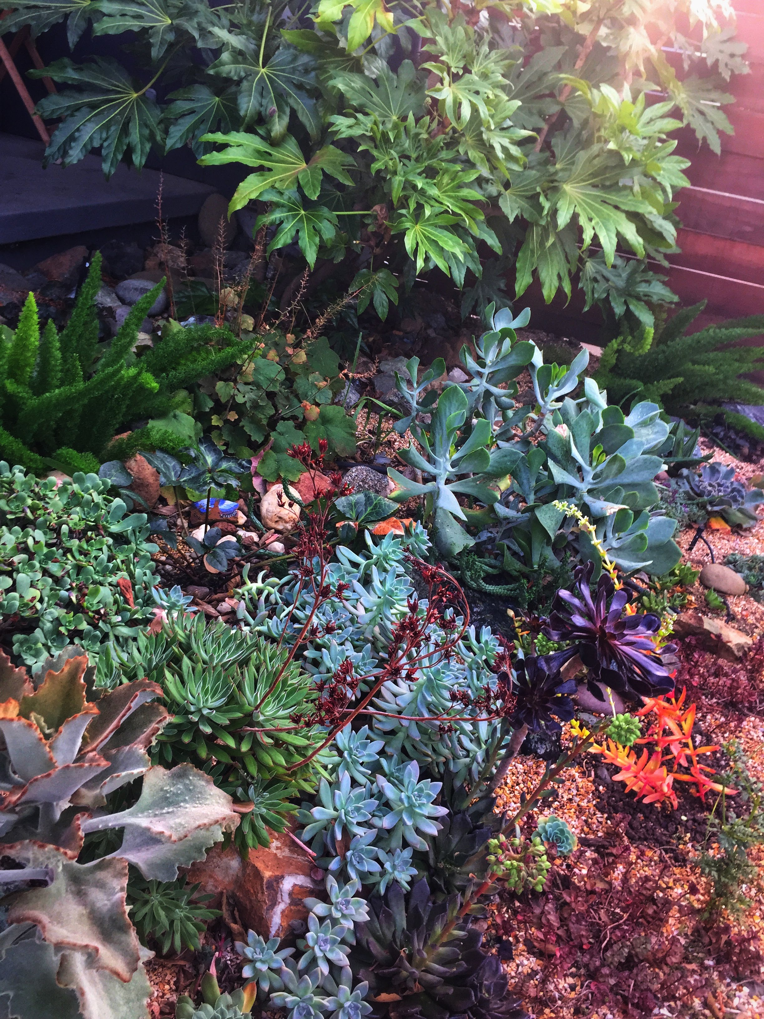 succulent drycreek