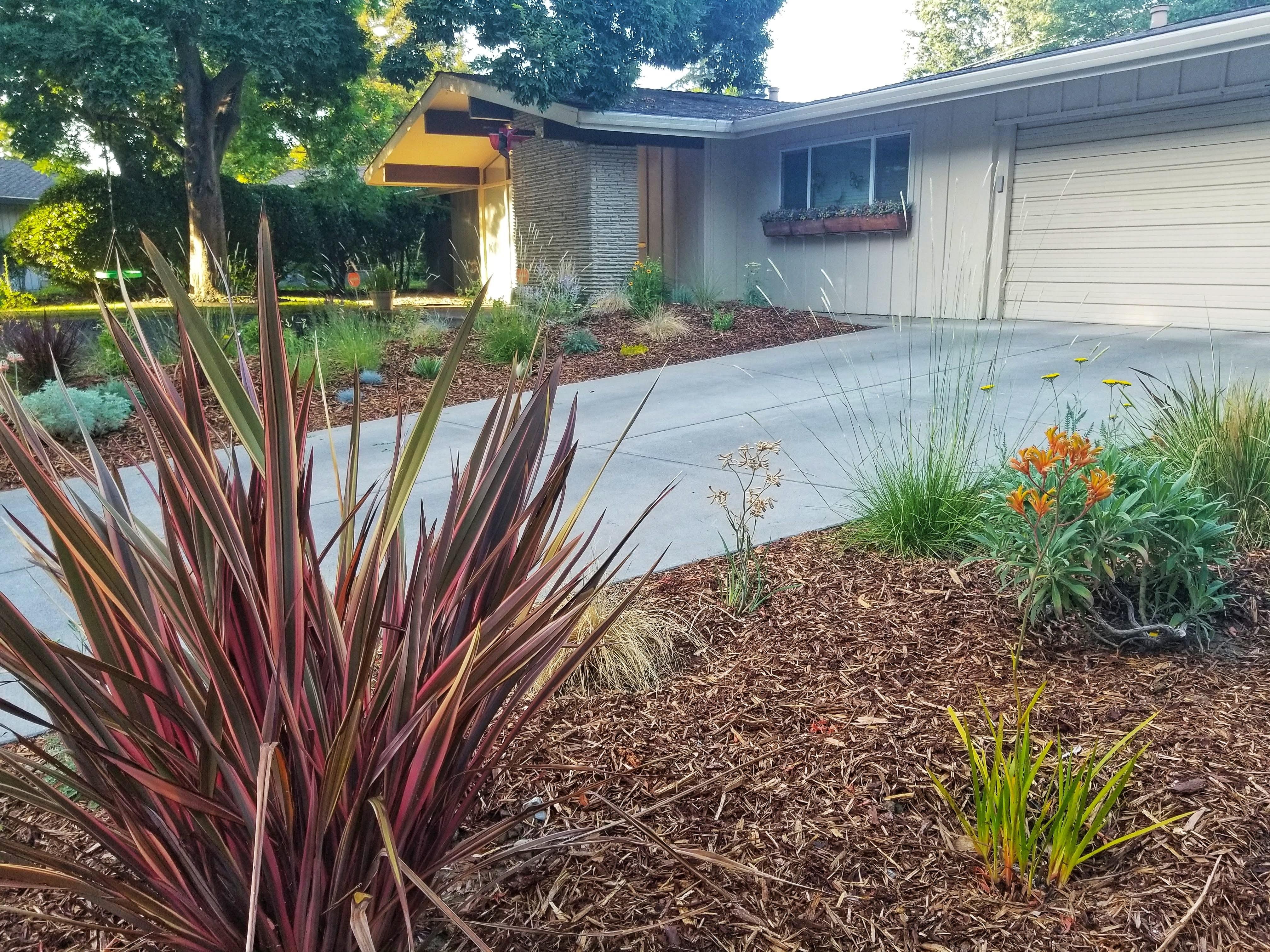 Family Streng Frontyard