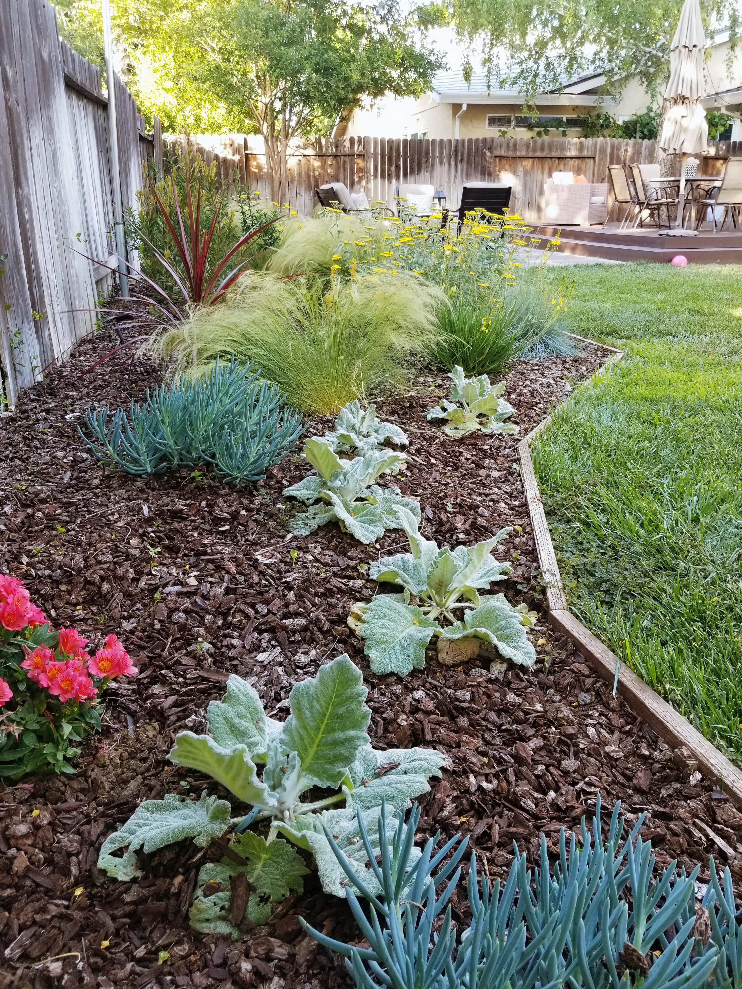 Balboa Backyard