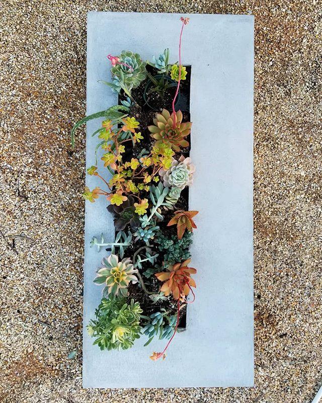 #livingart #livingwall #concreteandsucculents #californiasucculents #concreteartisan #sageandivydesi