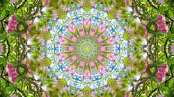 Kaleidoscope29_web