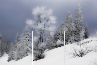 Snow Quiet.jpg