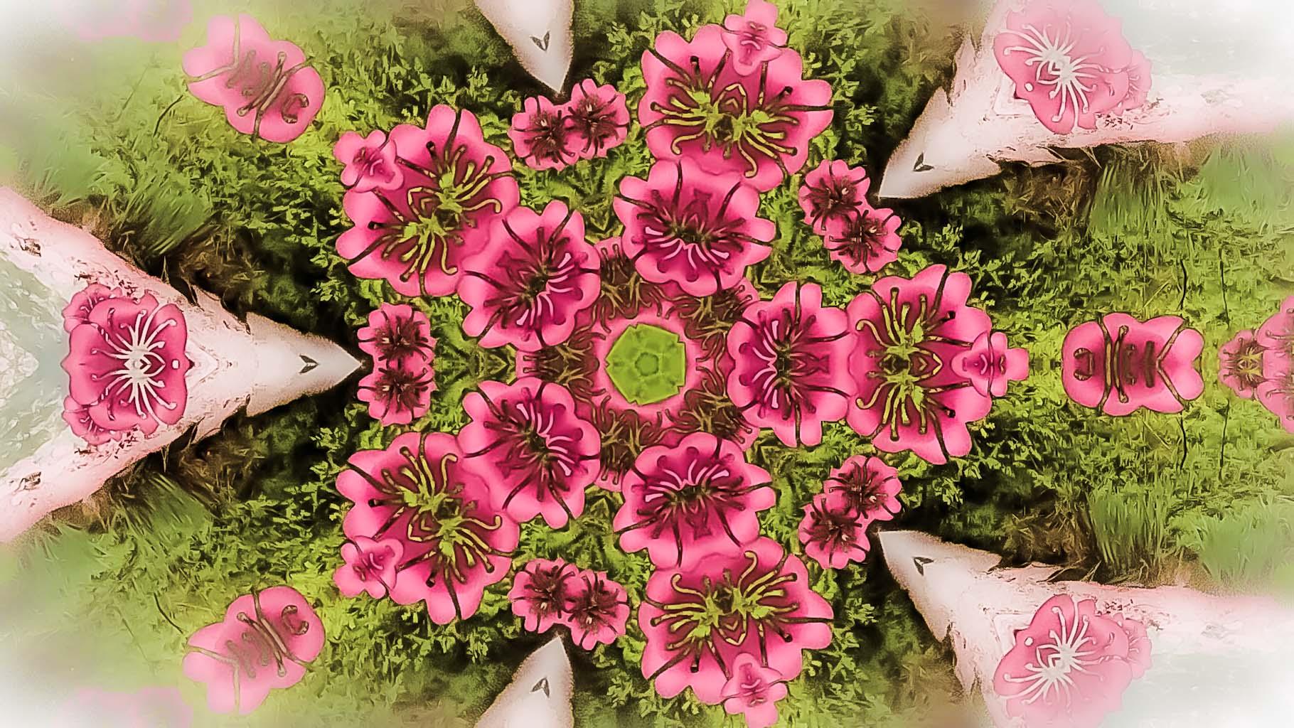 Kaleidoscope65_web