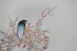 Avian Neural Interface _web