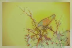 Avian Neural Interface  (9)_web