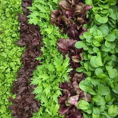 HOWARD & BEV SHAPLAND VEGETABLE GROWERS