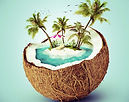 Tri 50 States  Triathlon Workouts  Coconut Workouts Palm Trees Ahead