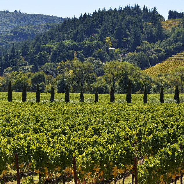 vineyard1_edited.jpg