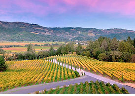 hw vineyard 2-4 (1).jpg