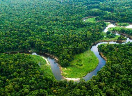 Projeto recupera florestas nativas da Mata Atlântica na Paraíba
