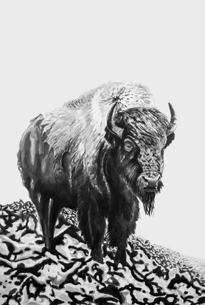 There were more bisons than stars