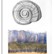 A Snail's Place.jpg