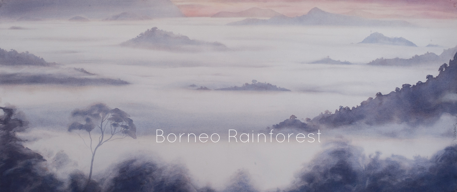 RainforestWords.jpg