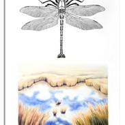 Wings over Wetlands.jpg