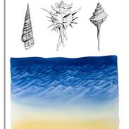 Seashells by the Seashore.jpg