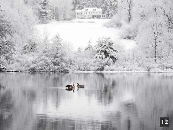 Dana Goedewaagen Geese in Snow.jpg