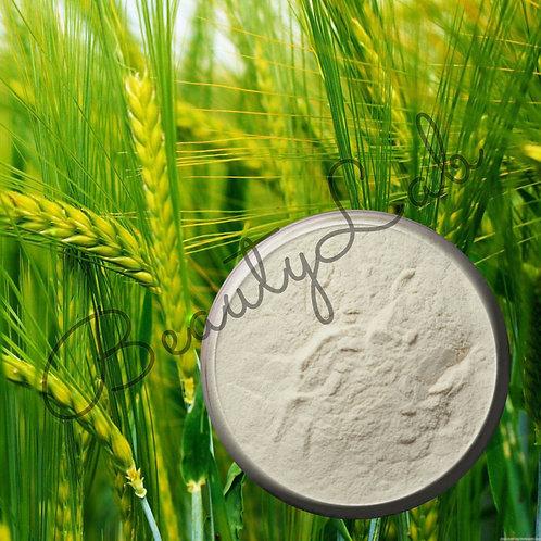 Экстракт Овса молочной спелости сухой (50 грамм)