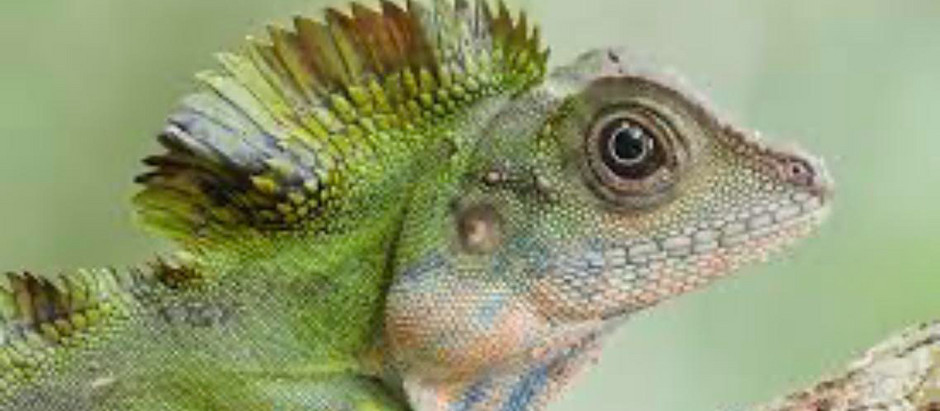 What I Learned from a Lizard about Meditation