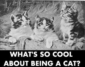 What's so cool about being a cat_cover.j