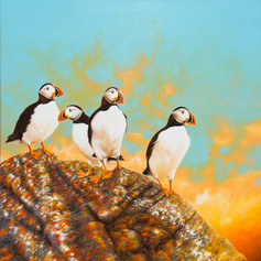 Dawn of the puffins