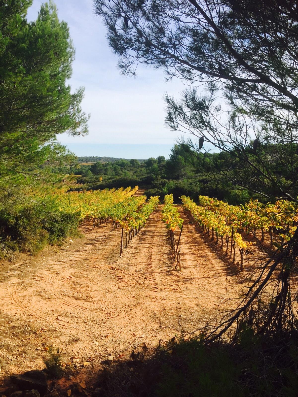 Creissan vines