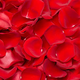 Fresh Red Rose Petals