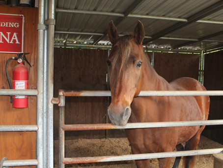 Equine Reiki, a First for Champ and for Ourselves