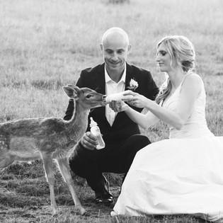 Gum Gully Farm Bride and Groom feeding a deer